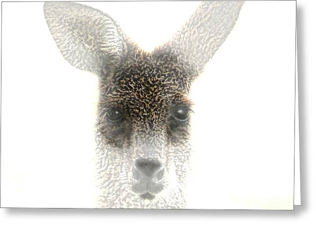 Kangaroo Greeting Card by Holly Kempe