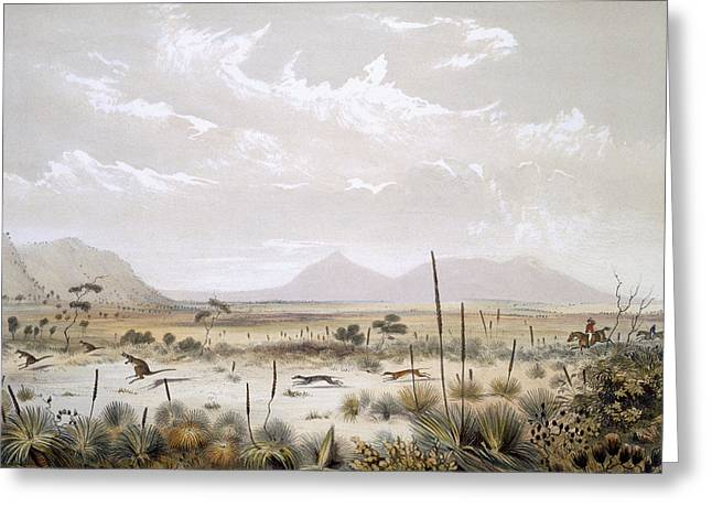 Kangaroo Hunting Near Port Lincoln Greeting Card by George French Angas