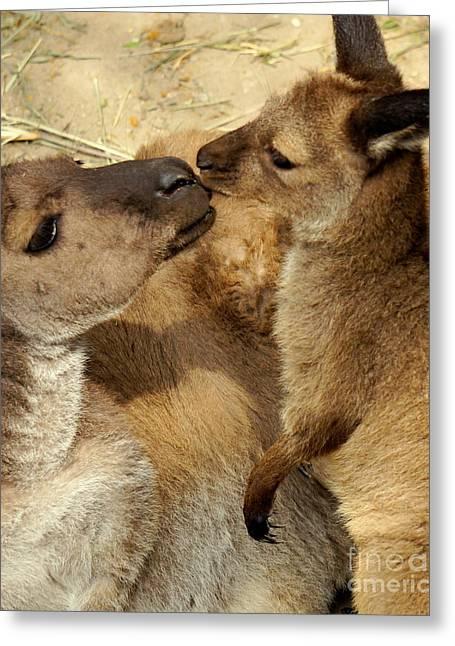 Kangaroo Kisses Greeting Card