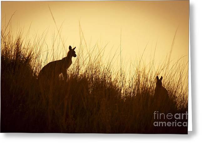 Kangaroo Silhouettes Greeting Card by Tim Hester