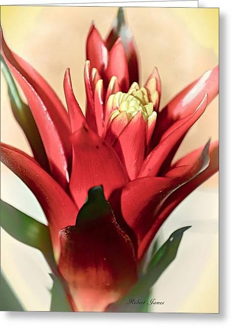 Kapiolani Bromeliad Greeting Card by Robert McPeek
