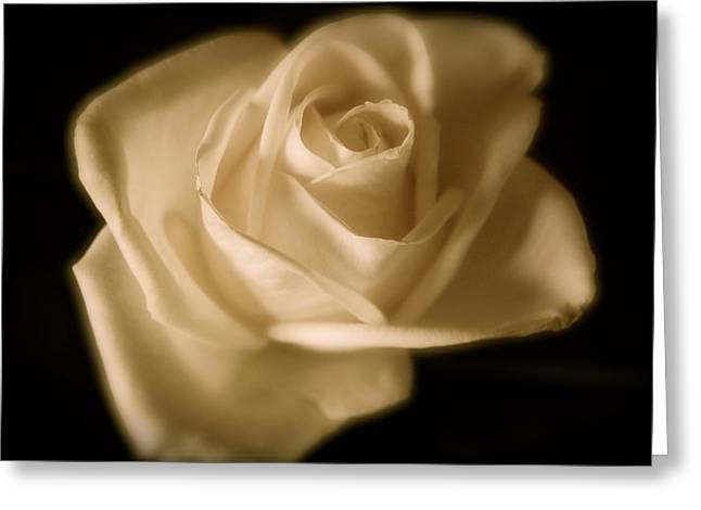 Katie's White Rose Greeting Card