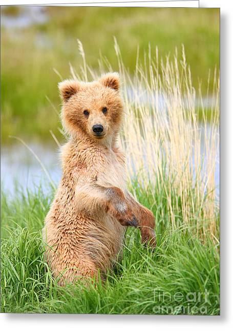 Katmai Cub Greeting Card