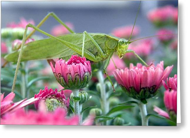 Greeting Card featuring the photograph Katydid by Teresa Schomig