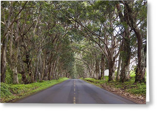 Kauai Tree Tunnel Road Greeting Card