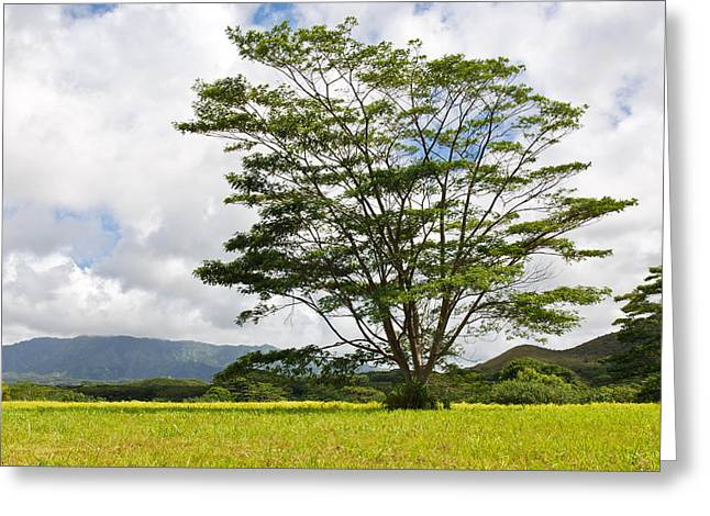 Kauai Umbrella Tree Greeting Card