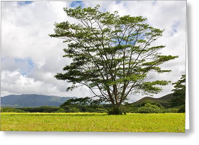 Kauai Umbrella Tree Greeting Card