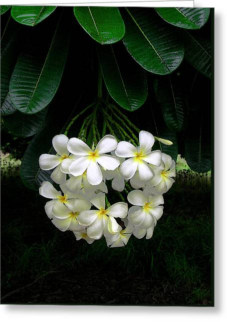 Kawela Plumeria Greeting Card by James Temple