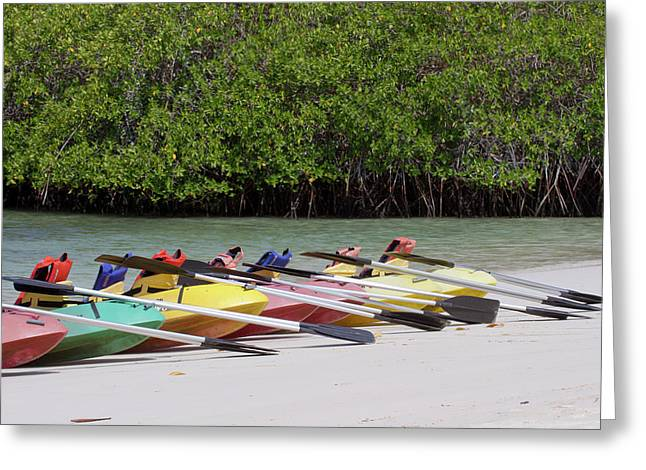 Kayaks At Tortuga Bay, Santa Cruz Greeting Card by Diane Johnson