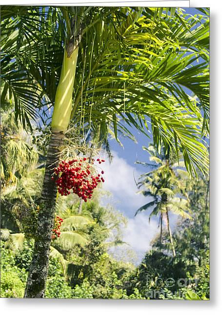 Keanae Palm Beauty Maui Hawaii Greeting Card