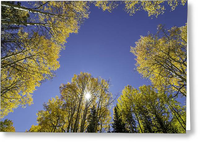 Kebler Pass Aspens Greeting Card by Michael J Bauer