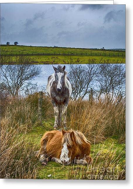 Keeping Watch Greeting Card by Chris Thaxter