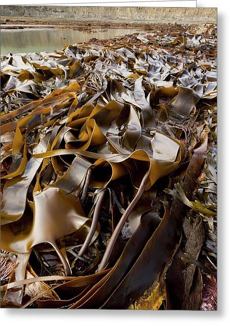 Kelp And Rock Pools Greeting Card