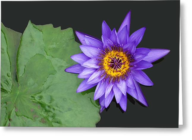 Kenilworth Aquatic Garden Greeting Card