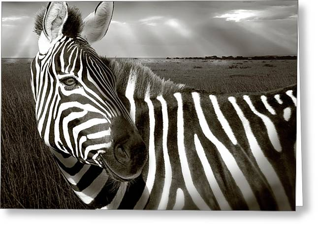 Kenya Black & White Of Zebra And Plain Greeting Card by Jaynes Gallery
