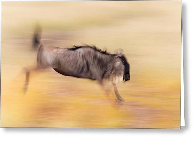 Kenya, Masai Mara National Wildlife Greeting Card by Jaynes Gallery