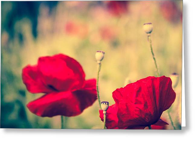 Keokea Poppy Dreams Greeting Card