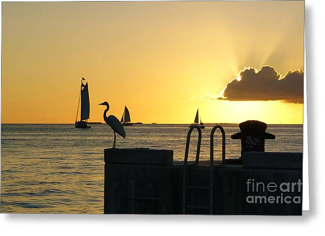 Greeting Card featuring the photograph Key West Sunset by Olga Hamilton