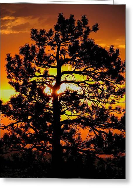Keystone Pine Greeting Card