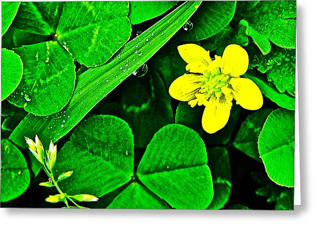 Kidneyleaf Buttercup In Chickasaw Village Site At Mile 262 On Natchez Trace Parkway-mississippi  Greeting Card by Ruth Hager
