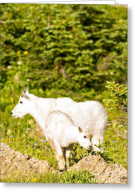 Kids In Glacier 4 Greeting Card by Natural Focal Point Photography