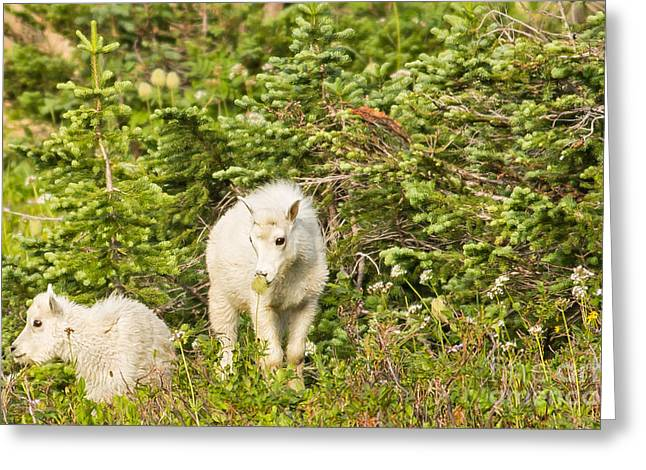 Kids In Glacier Np 3 Greeting Card by Natural Focal Point Photography