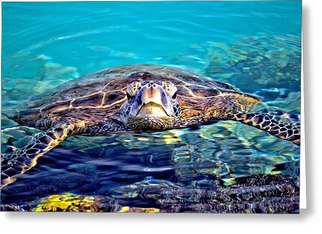 Kiholo Turtle Greeting Card by Bob Kinnison