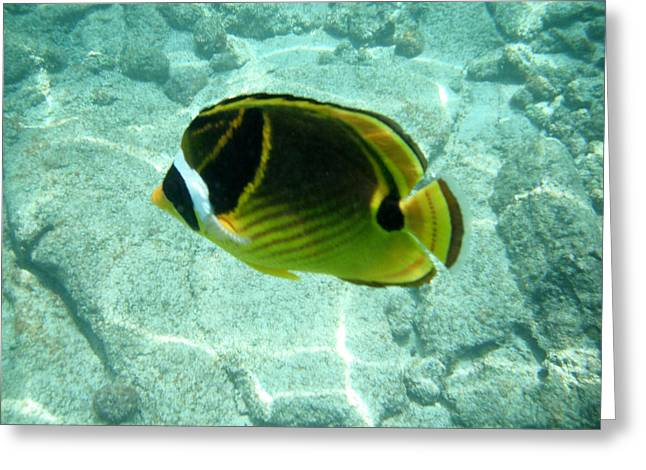Kikapapu Fish Greeting Card by Karen Nicholson