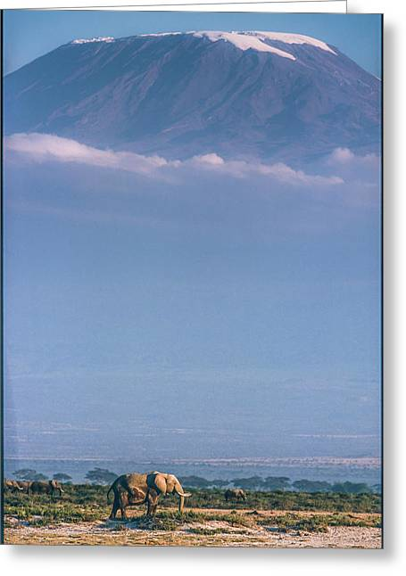 Kilimanjaro And The Quiet Sentinels Greeting Card