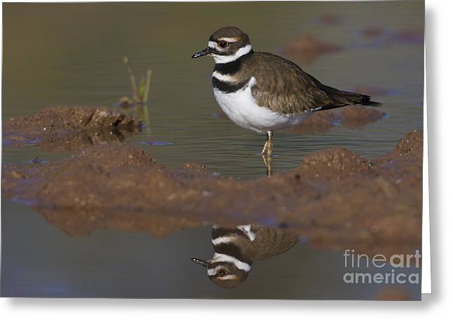Greeting Card featuring the photograph Killdeer Reflection by Bryan Keil