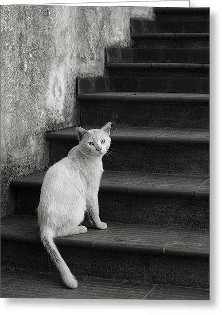 Greeting Card featuring the photograph Kimba by Laura Melis