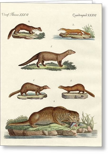 Kinds Of Otters And Marten Greeting Card