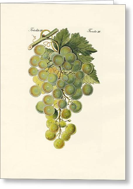Kinds Of Vines Greeting Card by Splendid Art Prints