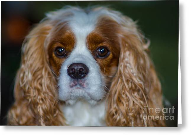 King Charles Greeting Card