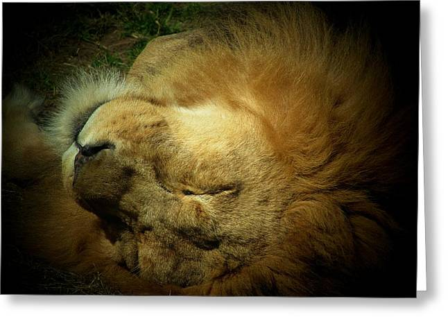 King Of Peace,lion Greeting Card
