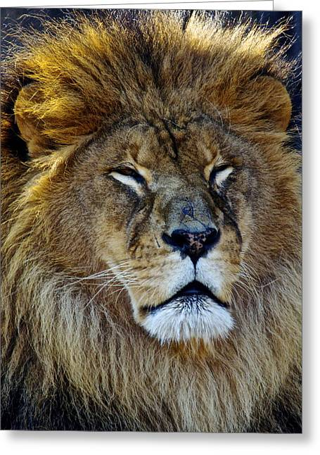 King Of The Beasts Greeting Card by Frozen in Time Fine Art Photography