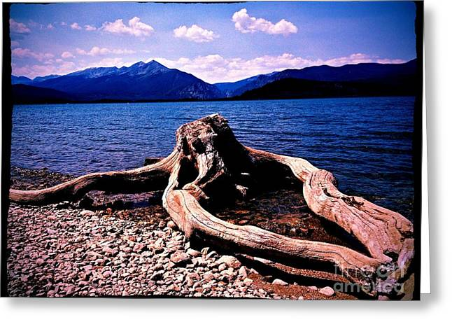 King Of The Driftwood Greeting Card by Garren Zanker