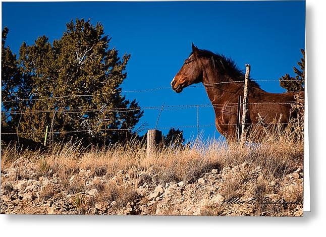 Greeting Card featuring the photograph King Of The Hill by Allen Biedrzycki
