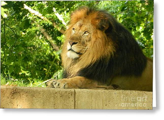 Greeting Card featuring the photograph King Of The Jungle by Emmy Marie Vickers