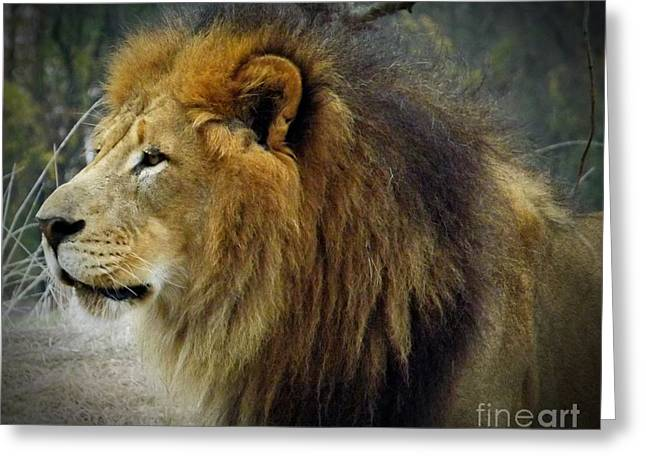 King Of The Jungle Greeting Card by Sara  Raber