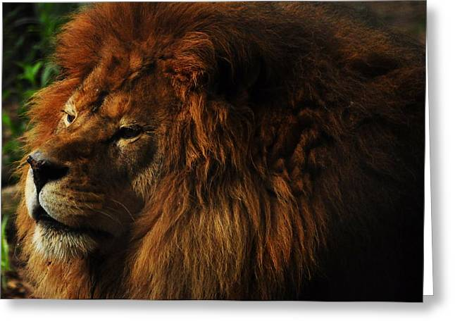 King Of The Jungle Greeting Card by Valarie Davis