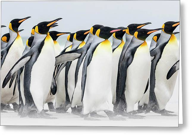 King Penguin (aptenodytes Patagonicus Greeting Card by Martin Zwick
