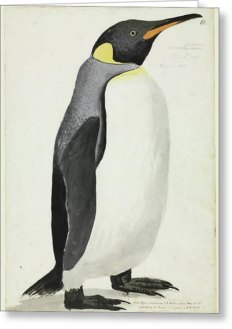 King Penguin Greeting Card by Natural History Museum, London