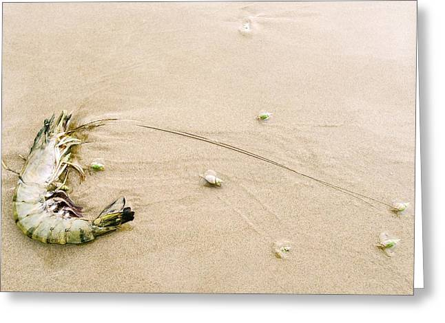King Prawn And Plough Snails Greeting Card by Peter Chadwick