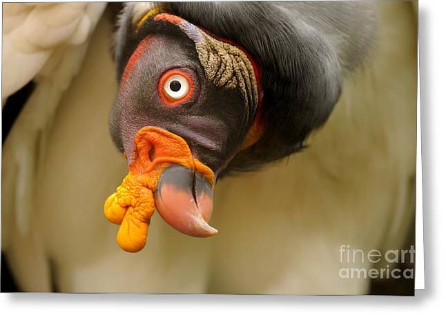 King Vulture Greeting Card by Mark Bowler