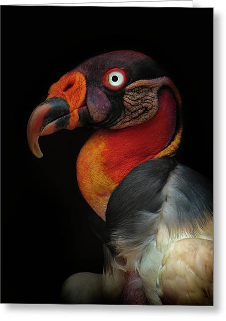 King Vulture-sarcoramphus Papa Greeting Card