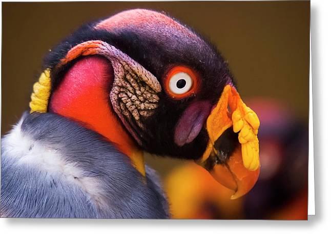 King Vulture Sarcoramphus Papa Greeting Card by Leonardo Mer�on