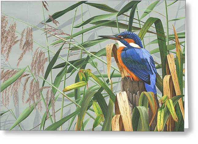 Kingfisher Greeting Card by Clive Meredith
