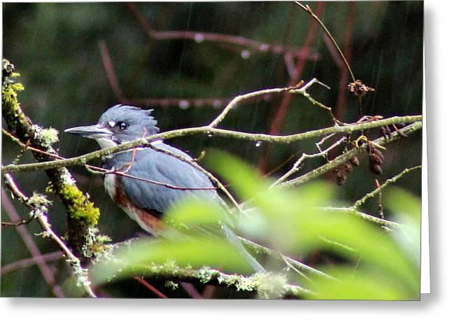 Kingfisher In The Rain Greeting Card by Debra Kaye McKrill
