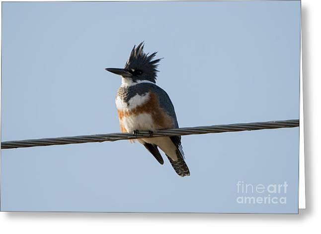 Kingfisher Profile Greeting Card